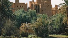 Groen gras in woestijn